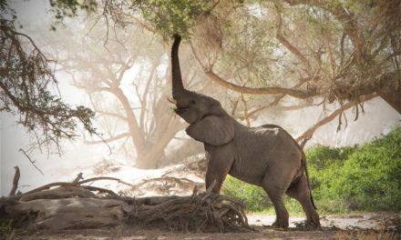 Les préparatifs à entreprendre pour un voyage serein en Namibie
