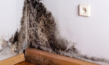 Détecter une infiltration d'eau dans un mur, comment faire ?